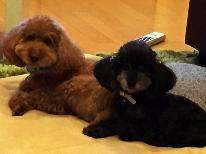 【ワンちゃん無料!!大切な愛犬と家族旅行♪】わんこと同室♪寛ぎ海鮮プラン