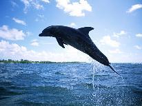 【お子様連れ限定】小学生は半額★日間賀島にイルカがやってくる!期間限定イルカウオッチング♪