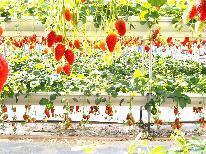 【割引券付!】あま~いイチゴが食べ放題♪スタンダードプラン【1泊2食付】