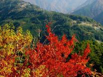 【紅葉の秋旅】【秋の味覚】キノコ料理&山国料理♪遠山郷の旬の料理を堪能!期間限定の味。特典付♪1泊2食付 プラン