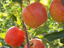 【9月~11月限定】●りんご●新亀イチオシ!季節の果物狩り≪無料≫りんごを味わい尽くそう◇1泊2食◇