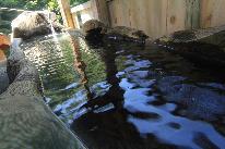 【ホールケーキプレゼント】秘湯de記念日プラン♪特別な日は源泉かけ流し温泉と米沢牛ステーキで♪
