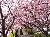 【河津桜まつり限定】桜にちなんだお料理を1品サービス♪潮騒スタンダードプラン★特典付