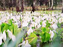 《期間限定》戸隠に春を告げる「水芭蕉」と「山野草」♪花々を愛でる 【1泊2食付】