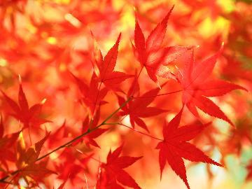 【秋祭り満喫★第3弾】全国社会人落語祭りを鑑賞♪〈チケット付〉