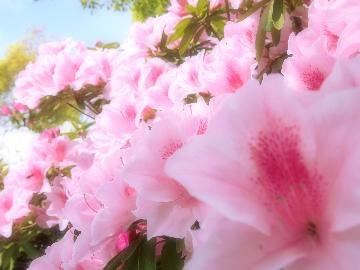【ツツジ山菜会席】季節の山菜を楽しむ美食会席 ~5月6日~31日までの限定プラン~
