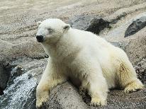 ■リーズナブル【旭山動物園チケット付】日本最北の動物園!生き生きとした動物たちに会いに行こう★
