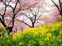 【河津桜】1ドリンク無料◆春爛漫!伊豆下田でさくら観賞♪ふっくら金目鯛と体喜ぶ朝採れ野菜《特典》