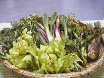 《信州・春の味覚》 安心のガイド付き・山の恵みをご自身の手で♪山菜採りツアープラン 【1泊3食付】