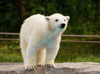 二人の旅行♪夏の北海道は旭川動物園で決まり♪車で15分のドライブで可愛い動物に会いに行こう!