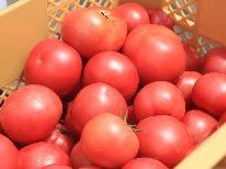 【収穫体験】とみもと農園で《トマト狩り 体験》入園料込み。トマトジュース&トマトジャムの嬉しいお土産付♪