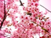 """【みなみの桜と菜の花まつり】*・季節のお土産プレゼント特典・* """"河津桜""""が咲き誇る!早春の風"""