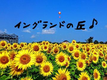 夏休みは淡路島へ♪SNS映え間違いなしのひまわりが待っています♪イングランドの丘入園チケット付き!