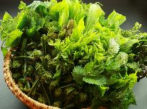 【内田屋春の膳】≪旬の採れたて山菜づくし和膳≫春の味覚山菜を食べつくす・・・