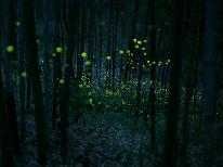 【3大特典】幻想的なホタルの光に癒されながら夕涼み~風情ある夏の夜~