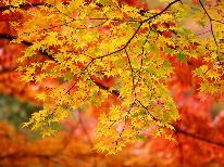 [特典付き]【秋限定★紅葉】甲州いろは坂~夕日に染まる紅葉と秋の味覚を楽しむ