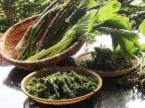 【春の味覚】山の恵み 山菜料理を食す♪期間限定 旬の食材で信州の春を味わおう~1泊2食付 プラン