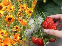 【期間限定】早春を楽しむ~いちご狩りと花摘みで春を満喫プラン♪貸切風呂OK!