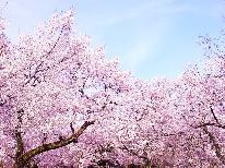 【お花見プラン】石川の桜と花見露天を満喫!ラジウム温泉と癒し旅♪
