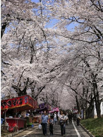 【2食付】赤城南面千本桜のお花見プラン(地酒付)