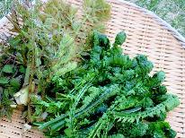 裏磐梯は今が旬♪山の幸たっぷりの山菜を湯流里で食べよう!!