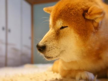 【ペット可】ワンちゃん1頭宿泊無料♪ 露天風呂×温泉ナイトプール -素泊まり-