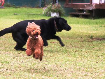 【スタンダード】ペット何頭でも無料!大型犬、多頭大歓迎☆季節の創作料理をペットと一緒に【1泊2食】
