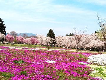 桜のトンネル【赤城南面千本桜】と上州の味覚を堪能★期間限定プラン★