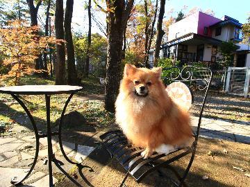 [1泊2食]【スタンダードプラン】ペットといつでも一緒♪わが家のように気ままくつろぎSTAY☆