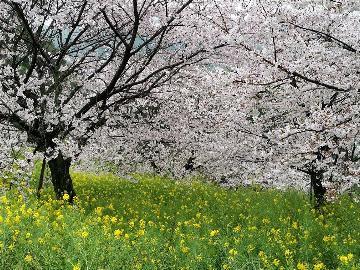 【ウォーキングプラン♪】春のパワースポットを女将と一緒に散策しよう!!≪1泊2食付≫