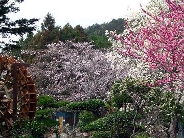 【お花見応援】4月中旬は一の瀬庭園が桜吹雪★スタンダードプランが1000円引き!