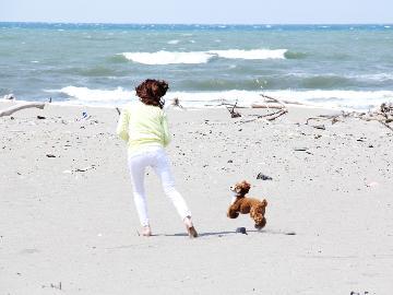 ◆10月以降専用◆☆ワンOne旅行☆愛犬と一緒に1人旅《morning》【平日限定】