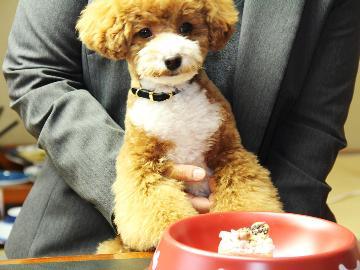 ☆ワンOne旅行☆愛犬と一緒に夕食控えめお気軽膳1人旅【平日限定】
