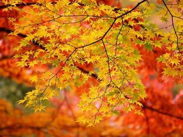 【7周年記念プラン】秋の味覚に舌鼓!秋彩◆宝石箱会席&松茸の土瓶蒸し《3大特典つき》