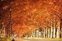 【紅葉】約500本のメタセコイアと直線道路が造り出す絶景♪リーズナブルな1泊2食付プラン♪
