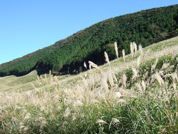【秋・紅葉】箱根の秋の風物詩・ススキ草原と紅葉★にごり湯と旬のお料理を楽しむ【特典付】