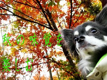 【現金特価】11月限定◆秋の味覚を楽しむ☆口コミ五つ星のこだわり会席料理◆部屋食orレストラン食【1泊2食】
