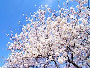 【春旅】英彦山へ春旅★ホッコリ温泉を楽しもう!≪2食付≫