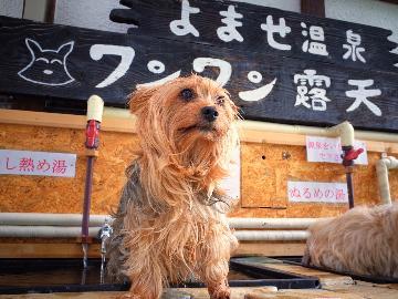 【1泊2食】愛犬と一緒にのんびり&気ままに『 一人旅 』・・・おひとり様 歓迎♪よませ温泉と北志賀高原を満喫