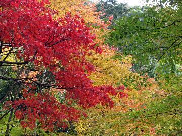 【特典付】期間限定◆秋を彩るもみじと旬の会席膳を楽しむ