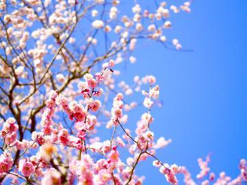 <湯河原【梅の宴】開催>4000本の梅が咲き誇る♪2・3月限定!入園券付プラン