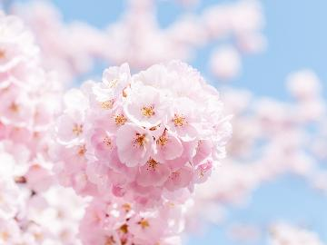 【期間限定】大子に春がやってきた!桜名所めぐりを楽しむお花見応援プラン★お土産特典付★